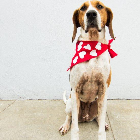 valentines day dog scarf craftgawker