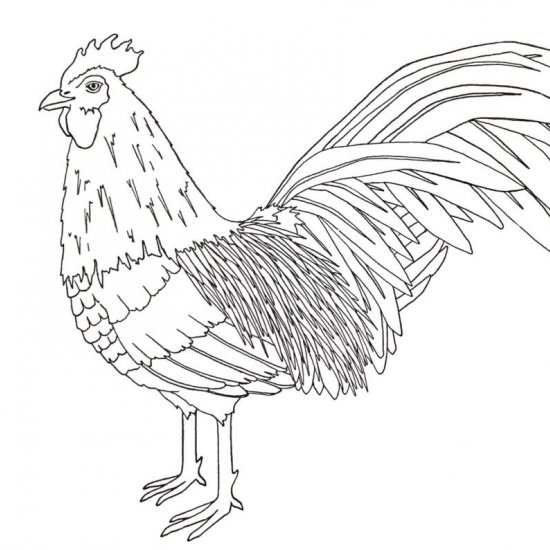 year of the rooster coloring page