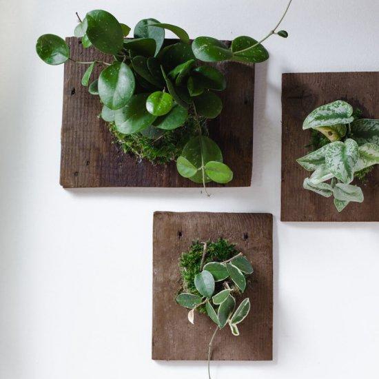 Wall Mounted Plants