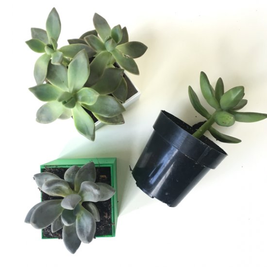 DIY Mini Succulent Planter Cubes